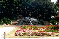 Civic Park Fountain, Newcastle, NSW, January 1989 (Coalfields Heritage Group) Tags: civicparkfountain fountains figtrees civicpark newcastlensw newcastle coalfieldsheritagegroup percysternbeckcollection nsw australia book22 sternbeckbk220189c010