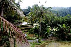 IMG_0748 (Marta Montull) Tags: holidays indonesia canon gopro malaysia kuala lumpur bali gili islands rice terraces temples monkey travel photography landscape
