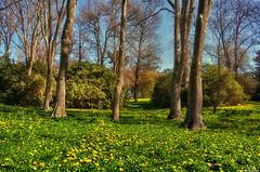 Spring meadow (Kevin_Jeffries) Tags: tree spring meadow flowers grass springtime nikon d90 jeffries colour new beauty nature natura