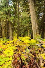 ancient forest  (131 of 151) (ve7org) Tags: ancientforest ancientcedars cedartrees parks trail