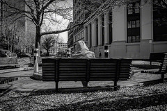 Man On Bench (lpwanthonymorganti) Tags: street people male person buffalo downtown streetphotography manonbench