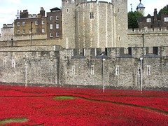 Poppies below Beauchamp Tower (jere7my) Tags: greatbritain vacation england london castle history memorial unitedkingdom wwi treasury historic prison worldwari poppies soldiers walls moat fortress englishhistory arrowslits toweroflondon veterans artinstallation 1066 casualties commemoration 2014 centenary royalmint wardead thetoweroflondon crenelations tompiper beauchamptower hermajestysroyalpalaceandfortress paulcummins towerpoppies bloodsweptlandsandseasofred 888246 ceramicpoppies