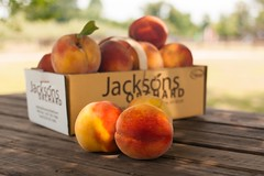 Contender--2 (Jackson's Orchard) Tags: kentucky peach orchard bowlinggreen contender bowlinggreenky jacksonsorchard