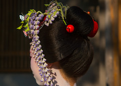 16 Years old maiko called chikasaya, Kansai region, Kyoto, Japan (Eric Lafforgue) Tags: 1617years 1people apprentice asia asian beautiful beauty chikasaya clothing colorful colourpicture culture elaborate eyes face female feminine geisha gion grace hair hairbun hairstyle headwear horizontal japan japan161727 japanese japaneseethnicity kanzashi kimono komayaokiya kyoto maiko makeup oneperson oneyoungwomanonly oriental painted pretty solitary teen teenager tradition unrecognizableperson white woman young youngadult youngwoman kansairegion giappone 일본 日本 japão japonia japonsko japonya jepang jepun اليابان япoнияяпoнія ญี่ปุ่น wistaria