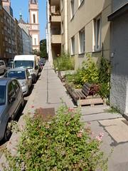 DSCN4657 (derudo) Tags: urbangardening grätzloase lebensqualität