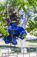 Leavin' em hung out to dry (Sharon's Shotz) Tags: park summer ontario canada tree bokeh kingston shorts trunks lakeontario drying swimmingtrunks hungouttodry
