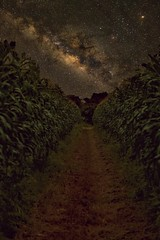 The Path to Enlightenment (miTsu-llaneous) Tags: nature field stars nikon astrophotography trinidad agriculture milkyway trinidadandtobago d5200