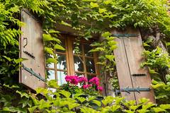 La fentre, en province, remplace le thtre et les promenades. Gustave Flaubert (S@ndrine Nel) Tags: fentre window ivy lierre yvoire auvergnerhnealpes hautesavoie villagemdival villagedefrance nelsandrine