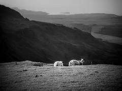 The Other Side of Storr (Isle of Skye, Scotland. Gustavo Thomas  2014) (Gustavo Thomas) Tags: uk travel blackandwhite bw naturaleza blancoynegro nature monochrome scotland isleofskye gb bnw biancoenero storr blancetnoir monocromtico