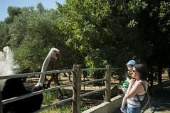 Granja Aventura y Alquzar (6) (Fernando Soguero) Tags: avestruz ostrych avestruzloca crazyostrych granjaaventura barbastro somontano huesca animales animals