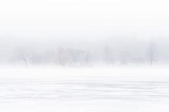 Lakeside Tree Line (ryanmense) Tags: winter snow tree ice nature wisconsin madison madisonwi whiteout frozenlake naturephotography madisonart wisconsinart wisconsinphotographer wisconsinlandscape wisconsinphotography madisonphotographer madisonphotography wisconsinnature ryanmense