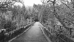 Bridge to the Forest (tommillerphotographer1) Tags: landscape blackandwhite scenery naturephotography scotlandsbeauty bridge perspective scotlandgreatshots photography outdoors forest visitscotland trees scotland sceneryshots treephotography forests countryside scenic