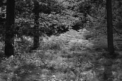forest and fern (picturesbywalther) Tags: plants fern nature forest pflanzen grn wald farn