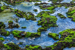 Weakly acid stream (gori-jp) Tags: water moss nature hotspring