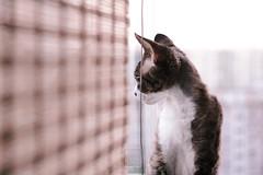() Tags: pink light bright colors fade     cat window cute devon rex kitten big eyes