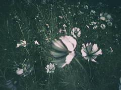touched by the wind (Stillhet A.) Tags: wind flowers dark