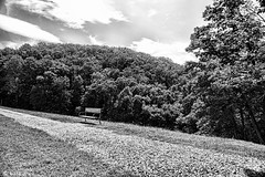 The bench (awscas) Tags: maryland afternoon vacation bench grass black blackandwhite monochrome frederick