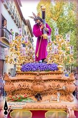 Pasin2014 (25) (Guion Cofrade) Tags: fe cofradia cofrade iglesia imagen cristo religion pasin pasion nazareno andalucia seor santa granada devocin