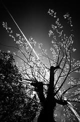 Over the tree travel (Vanvan_fr) Tags: monochrome nb noiretblanc bw blackandwhite arbre tree nature backlight contrejour line ligne diagonale diagonal travel voyage plane avion vol flight ombre shadow light dark france photo gr