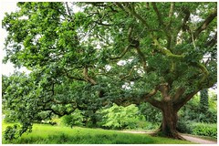 Lord of the manor. (arransquare) Tags: middleireland ireland oak castle green shabby elegant power beauty
