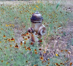 fire hydrant and flowers (fxb81 harley davidson) Tags: hydrant fire flowers field silver old