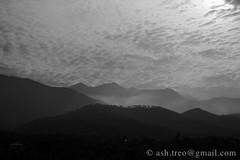 hills of Palampur (locustyears) Tags: hills monochrome blackandwhite bw landscape smoky smokey gentlyrollinghills rollinghills