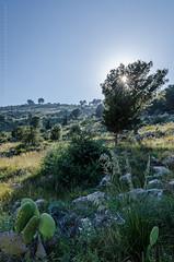 Nature (Gaetano.Quattrocchi) Tags: india nikon natura monte sicilia bagheria fico catalfano d7000 iamnikon