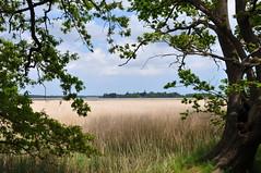 Looking across the reedbeds and river towards Iken Church (Kirkleyjohn) Tags: trees reeds suffolk framing eastanglia reedbeds iken