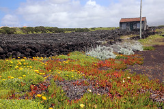 A garden on Pico (siebensprung) Tags: portugal island atlantic insel pico azores atlantik acores azoren