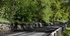 Loch Lomond Bluebells (Jill Hempsall) Tags: mountains bluebells landscape scotland highlands nikon lomond lochlomond d7100 tamron16300mm