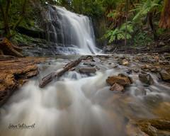 Lilydale Falls in full flow! (SteveWhitworthPhoto) Tags: australia tasmania northerntasmania lilydalefalls longexposure waterfall littlestopper nikon nikon1635mmf40 nikond800e