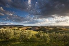 Olive Trees (Lance Sagar) Tags: olive trees tuscany rows landscape italy toscana cloud sky sunset evening gold light golden canon 6d