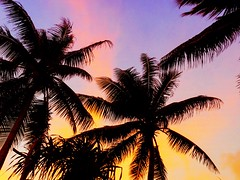 Sunset above the palmtrees.