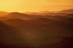 Inundacin (L.Barrera) Tags: espaa mountains sunrise landscape andaluca spain paisaje sierra amanecer monte andalusia siluetas lomas olivar inundacindeluz leobarrera sucesindemontaas