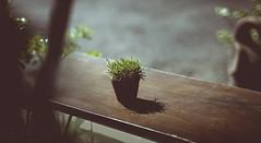 Simple pleasure (Kiss Midori) Tags: green flower sad
