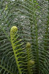 Grten der Welt (Gardens of the World) (Bjrn O) Tags: grten garten garden grtenderwelt botanik pflanze pflanzen plant plants flower flowers blume blumen farn fern