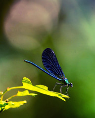 #auvergne #animals #photodujour #insect #boke #nature (omegaz63400) Tags: auvergne nature photographer pentax k50 instagram