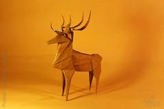 Fumiaki Kawahata - Deer (IverRu) Tags: iver kawahata deer