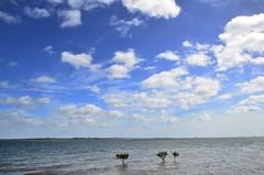 LOX_2764 (LoxPix2) Tags: loxpix panorama photo pelican seaeagle australia aircraft architecture brisbane boat bird building clouds island queensland jetty sponge moretonbay