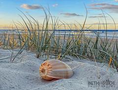 Sun.Sand.Shells.Serenity (Beth Wode Photography) Tags: sand shell serenity seagrass beach goldcoast queensland surf sea ocean beachscape beth wode bethwode