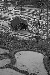 IMG_1615 (aaronjohnson19) Tags: rice terraces sapa vietnam bw