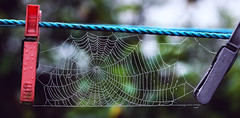 Spider web (red.fox.child) Tags: spider web spiderweb nature drop water drops rain dew macro closeup bokeh animal animals
