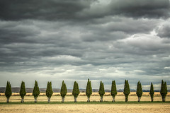 trees all in a row (jody9) Tags: oregon rowoftrees stormy