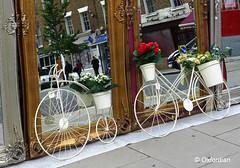 London - Velocipedes in the mirror (oxfordian.world) Tags: flowers england london vintage decorative spiegel mirrors bikes blumen bicycles gb nostalgic streetview nostalgie fahrrder oxfordian velocipedes londonstreetview lumixlx7 oxfordiankissuth