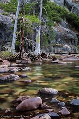 Tuolumne River (samuel_parker) Tags: california usa water yosemitenationalpark sierranevada tuolumneriver yosemitehighcountry