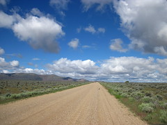 Mama Sage-grouse crossing the road