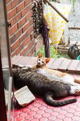 : Summer drooping ( manbo) Tags: korea seoul summer cat straycat