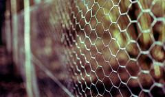 Fencing Days (iratebadger) Tags: blur 35mm fence iso100 nikon focus dof image bokeh outoffocus depthoffield nikkor f18 lightroom d7100 nikond7100 iratebadger