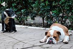 IMG_20160705_193936 (IzqMx1) Tags: perros animales mascotas