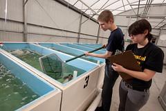 Crystal Lake Middle School (MyFWC Research) Tags: aquaculture hatchery fishhatchery stockenhancement school education outreach portmanatee florida fwc myfwc myfwccom